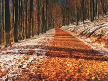 Snowy-Weg unter Buchenbäumen im frühen Winterwald Stockbild