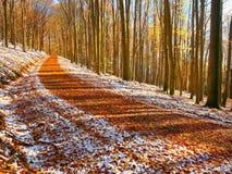 Snowy-Weg unter Buchenbäumen im frühen Winterwald Lizenzfreie Stockbilder