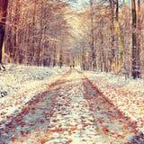 Snowy-Weg unter Buchenbäumen im frühen Winterwald Lizenzfreie Stockfotos