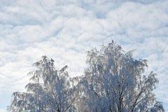 Snowy-Weiß Treetops und bewölkter Himmel Lizenzfreies Stockbild