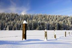Snowy-Weide Lizenzfreies Stockfoto