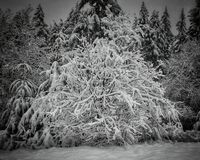 Snowy-Weide Lizenzfreie Stockbilder
