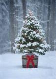 Snowy-Weihnachtsbaum mit bunten Lichtern in einem Wald Lizenzfreie Stockfotografie