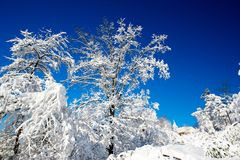 Snowy-Weihnachtsmorgen Stockfoto