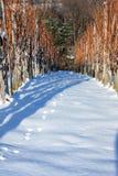 Snowy-Weinberg im Winter Lizenzfreies Stockbild