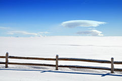 Snowy white Stock Image