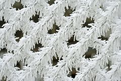 Snowy white fence Royalty Free Stock Photo