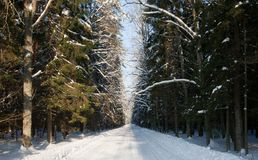 Snowy wide ground road crossing old mixed stand Royalty Free Stock Photos