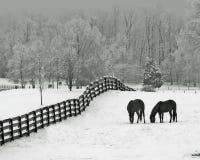 Snowy-Wiese u. Pferde Lizenzfreie Stockfotografie