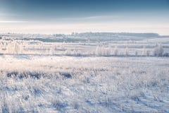 Snowy-Wiese und -gras mit Reif durch steigende kalte Sonne Schönes Bild des Winters landscape Dunstiger Wintermorgen Lizenzfreies Stockfoto