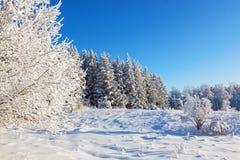 Snowy-Wiese am Wald Stockbild