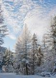 Snowy-Wildnis lizenzfreies stockfoto