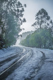 Snowy winding road among eucalyptus trees Stock Photo