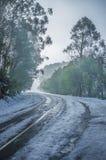 Snowy winding road among eucalyptus trees Stock Photo