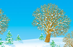 Snowy winter Stock Image