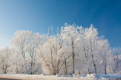Free Snowy Winter Stock Photography - 12795472