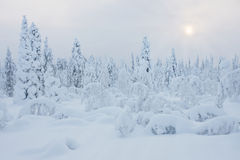Snowy winter Stock Photos
