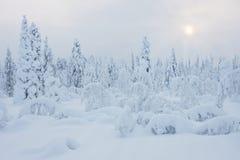 Snowy-Winter Stockfotos