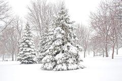 Snowy winter. Stock Photos