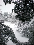 Snowy winter. Scenery, framed with spruce branches Royalty Free Stock Photography