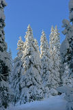 Snowy winter Royalty Free Stock Images