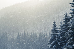 Snowy winter background Stock Images