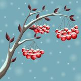 Snowy winter branch illustration with red berry and leaf, in snowfall for Christmas. Snowy winter branch illustration with red berry and leaf, in snowfall Royalty Free Stock Image