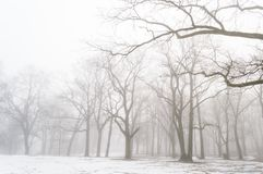 Snowy winter city park in mist. Cold winter city park in mist with snow covered tree trunks Stock Images