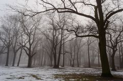 Snowy winter city park in mist. Cold winter city park in mist with snow covered tree trunks Royalty Free Stock Photo