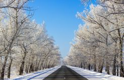 Beautiful snowy winter road in the forest on sunny day royalty free stock images