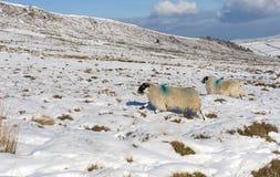 Snowy winter countryside landscape scene Stock Photo