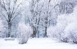 Snowy winter day Royalty Free Stock Photos