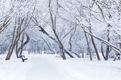 Snowy winter day Stock Photography