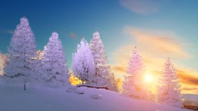 Snowy winter fir forest at scenic sunset. Winter scenery with snow covered fir tree forest among snowdrifts under scenic sunset or sunrise sky. 3D illustration Royalty Free Stock Photography