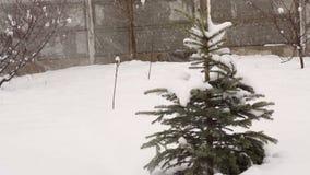 Snowy winter fir tree in a park.  stock footage