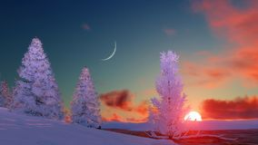 Snowy winter firs at scenic sunset Royalty Free Stock Photos
