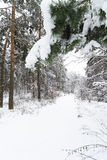 Snowy Winter in the Forest Stock Photo
