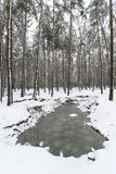 Snowy Winter in the Forest Royalty Free Stock Photo