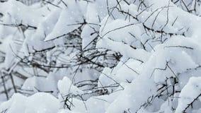 Snowy winter stock video footage