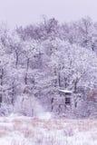 Snowy winter Royalty Free Stock Photo