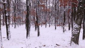 Snowy winter stock video