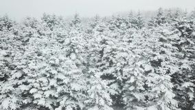 Snowy winter forest aerial shot stock footage