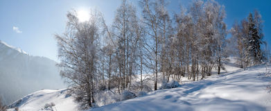 Snowy winter in forest Stock Photo