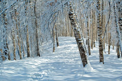 Snowy winter in forest Stock Photography
