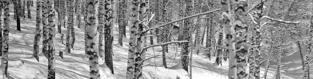 Snowy winter in forest Stock Image