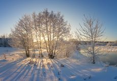 Snowy winter forest with bushes and trees on the stream Bank, Russia, the Urals Royalty Free Stock Images
