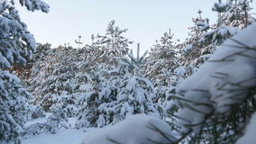 Snowy winter forest Christmas stock video footage