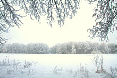 Snowy winter forest fairy Royalty Free Stock Photos