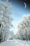Snowy winter forest fairy Stock Photography