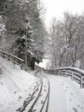 Snowy winter forest and knurled wide trails. Christmas morning. Stock Images